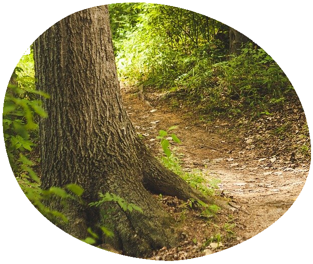 Dirt path in a wooded area